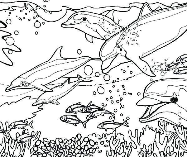 600x504 Dolphin Coloring Pages Coral Reef Fish Dolphin Coloring Dolphin