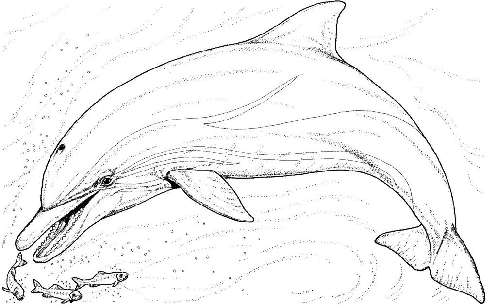 1024x634 Free Dolphin Coloring Pages Hagio Graphic Dolphin