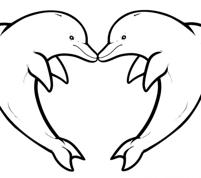 678x600 Dolphin Coloring Pages Printable Coloring Page