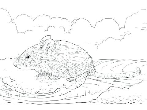 480x360 Dormouse Animal Coloring Pages Common House Mouse Eats Coloring