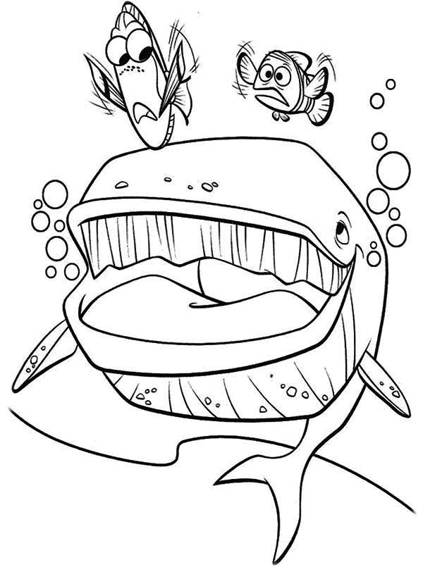 Dory Finding Nemo Coloring Pages At Getdrawings Com Free For