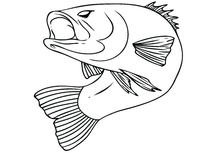 687x515 Bass Coloring Pages Fish Coloring Pages Fish Coloring Pages Puffer