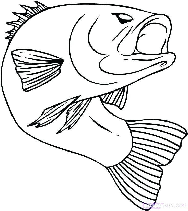 736x823 Bass Coloring Pages Tropical Bird Coloring Pages Realistic Fish