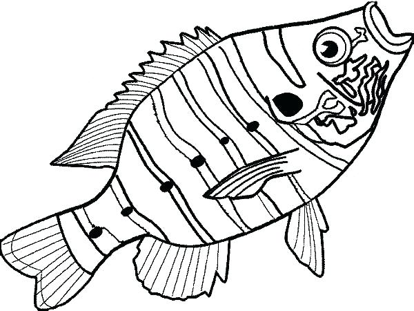 600x450 Double Bass Colouring Page Fish Outline Free Download Best