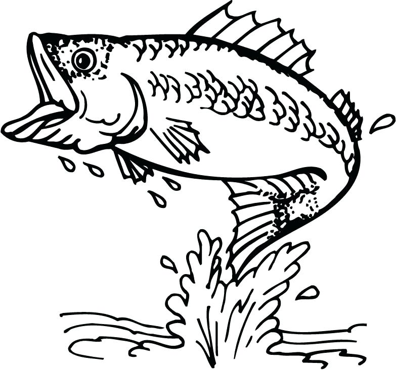 783x733 Free Bass Outline Download Free Clip Art Free Clip Art On Double