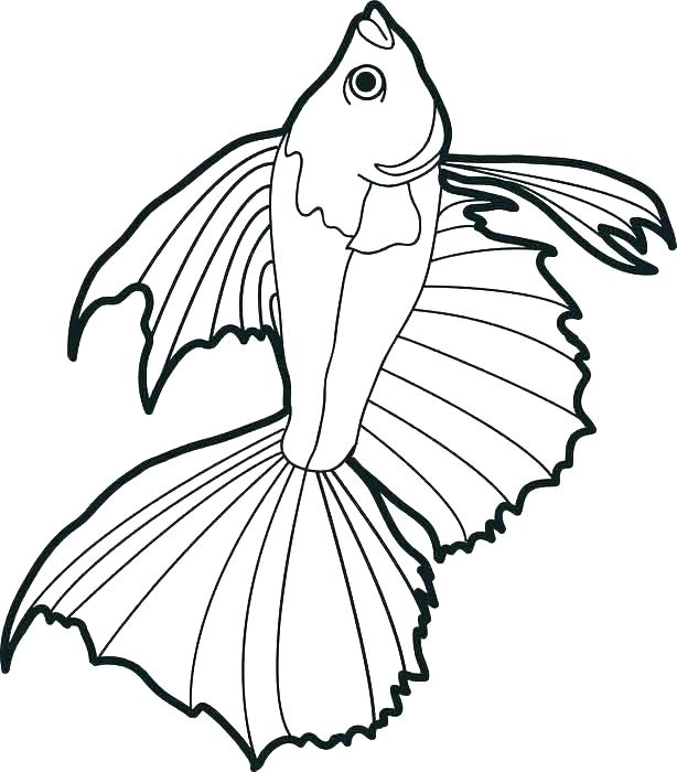 614x700 Bass Coloring Pages Bass Fish Coloring Pages Striped Bass Coloring