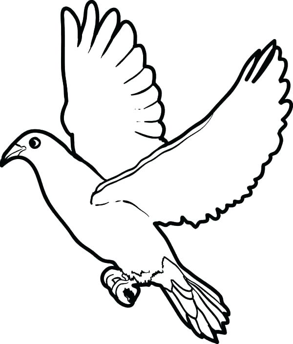 600x705 Dove Coloring Pages Wing Coloring Pages Big Dove Coloring Page