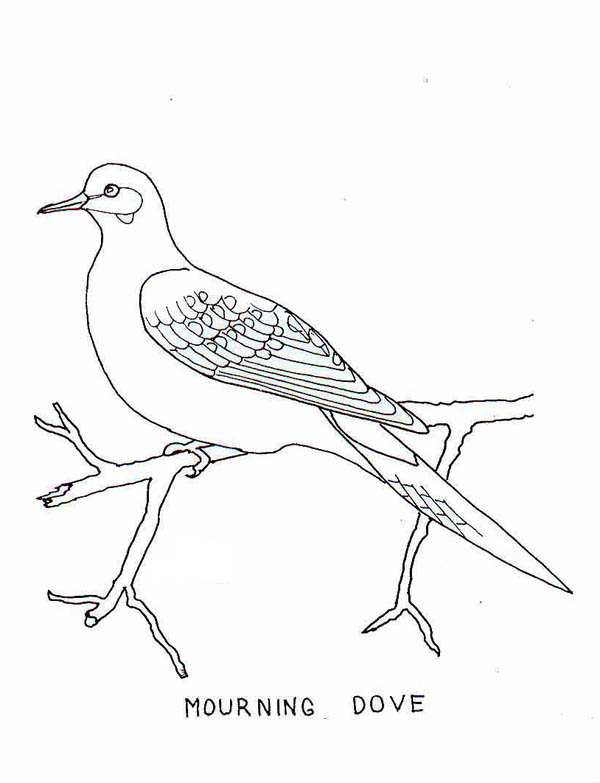 600x783 Mourning Dove Clipart Black And White