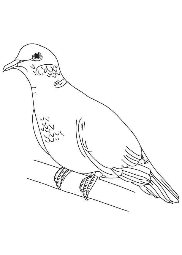 613x860 Doves Coloring Pages