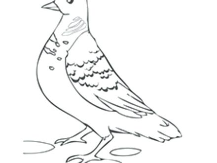 440x330 Dove Coloring Page Dove Coloring Pages Dove Coloring Page Dove