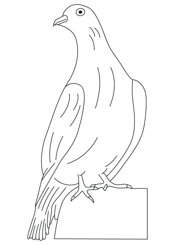 613x860 Dove Coloring Page White Winged Dove Coloring Page Free Printable