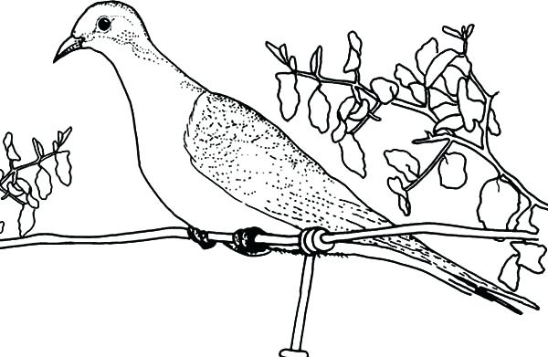 600x391 Dove Coloring Pages Peace Coloring Pages Coloring Kids Of Dove