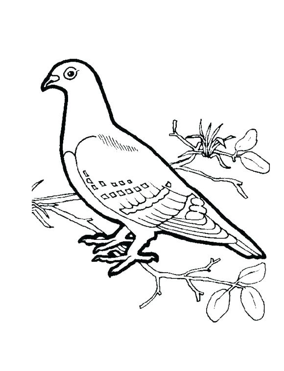580x758 Dove Coloring Pages Perched Mourning Dove Coloring Page White Dove