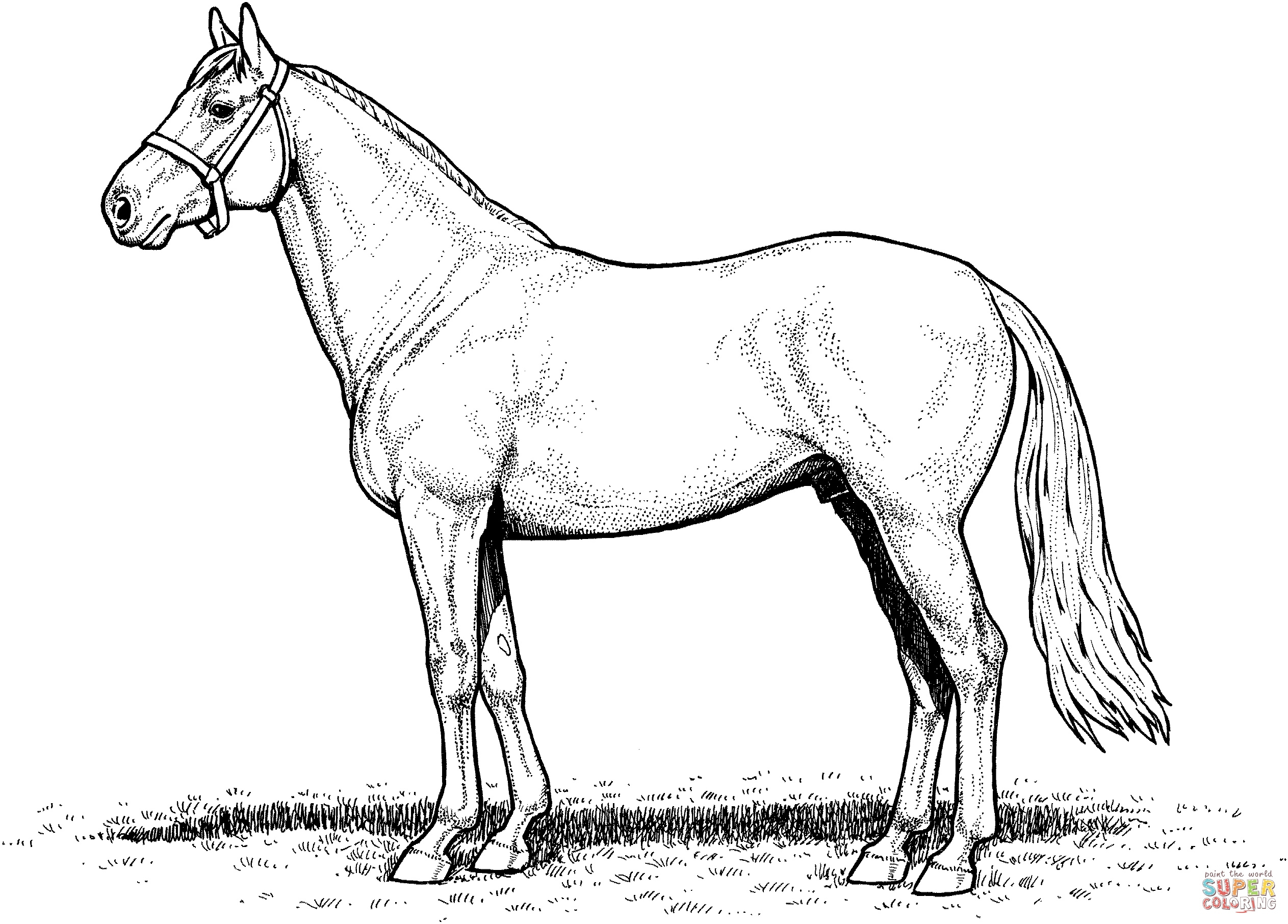 2526x1812 Coloring Pages Horses Lovely Draft Horse Coloring Pages Realistic