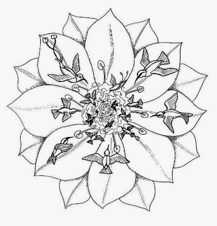 746x777 Animal Flying Collibri Mandala Coloring Pages