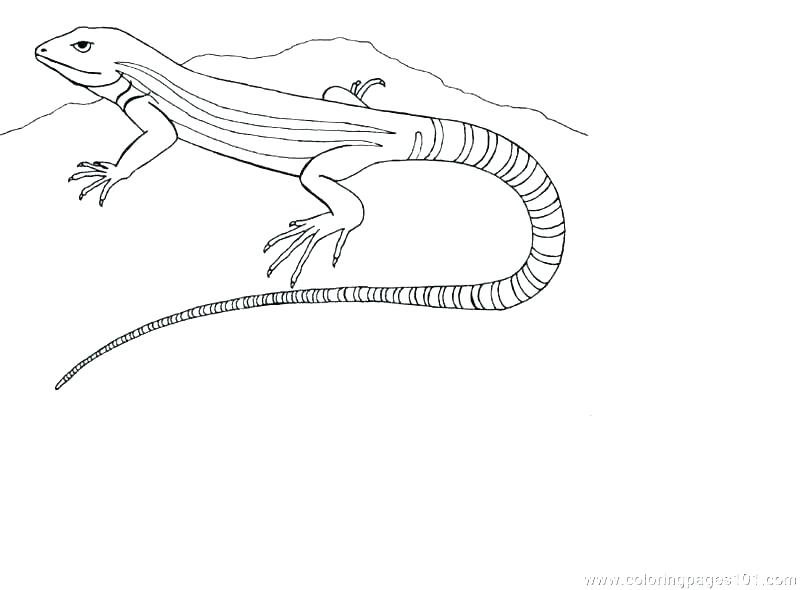 800x590 Printable Lizard Template Printable Coloring Page Pages Cartoon