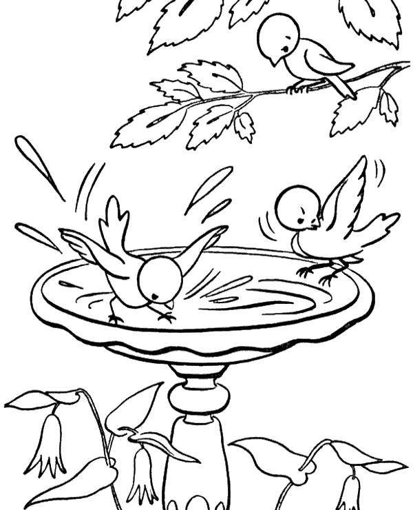 600x740 Birds Drinking Water Coloring Sheets To Print Or Download For Free