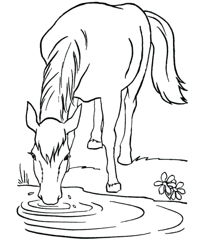 800x950 Newt Coloring Page Baroque Bridle Horse Who Was Drinking Coloring