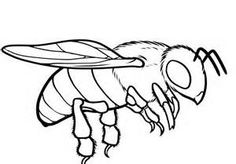 236x164 Bee Coloring Pages Bee Embroidery Patterns Bees