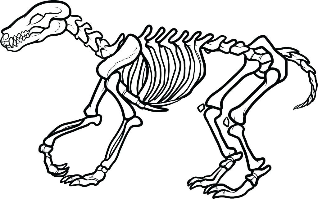 1024x642 Skull And Crossbones Coloring Pages Bone Coloring Page Dog Bones