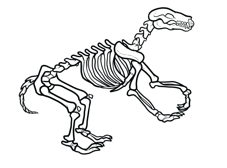 863x637 Bones Coloring Pages Skeleton Coloring Page Skeleton Coloring