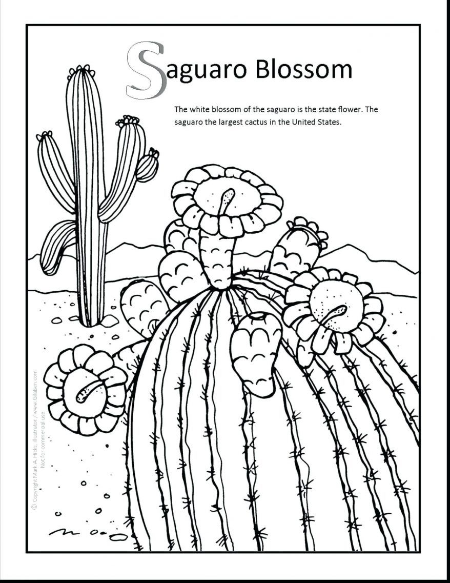 878x1137 Astonishing Saguaro Blossom Coloring Page Printout Marvellous
