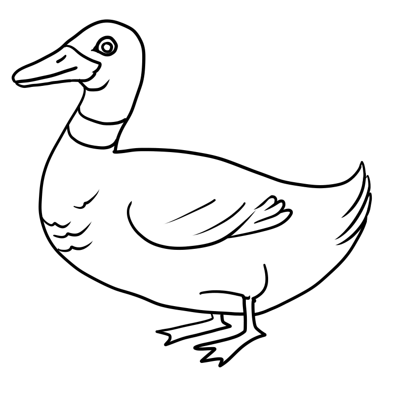 800x800 Duck Coloring Pages Free To Download Coloring Pages For Kids