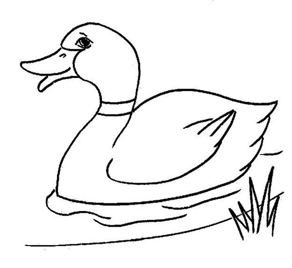 600x551 Duck Coloring Pages Nursery Room