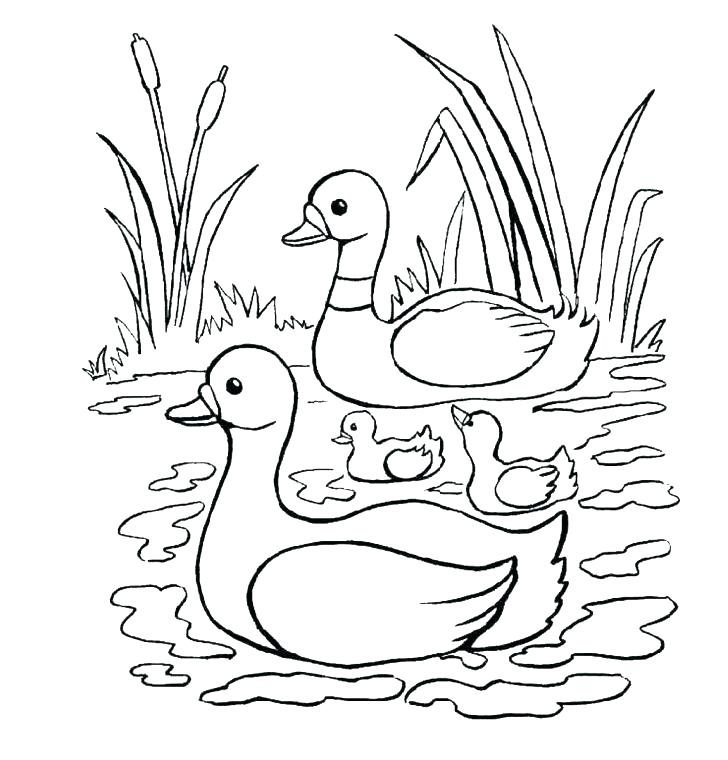 728x760 Duck Coloring Pages Duck Coloring Pages Duck Coloring Pages