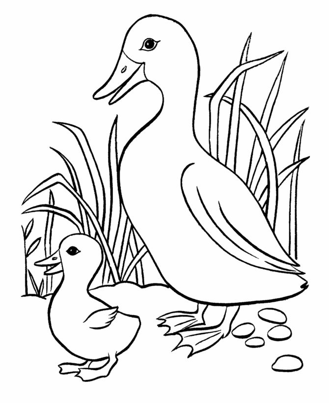 670x820 Best Duck Images On Ducks, Animated Cartoons