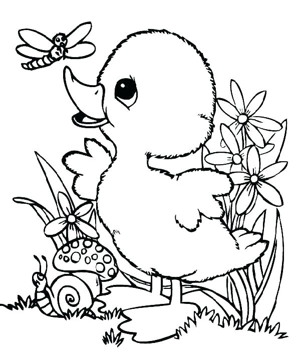 591x709 Cute Duck Coloring Pages Drawn Duck Baby Duck Cute Baby Duck