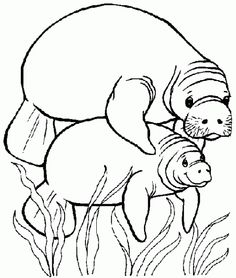 236x278 M Is For Manatee Manatee, Coloring Worksheets And Worksheets
