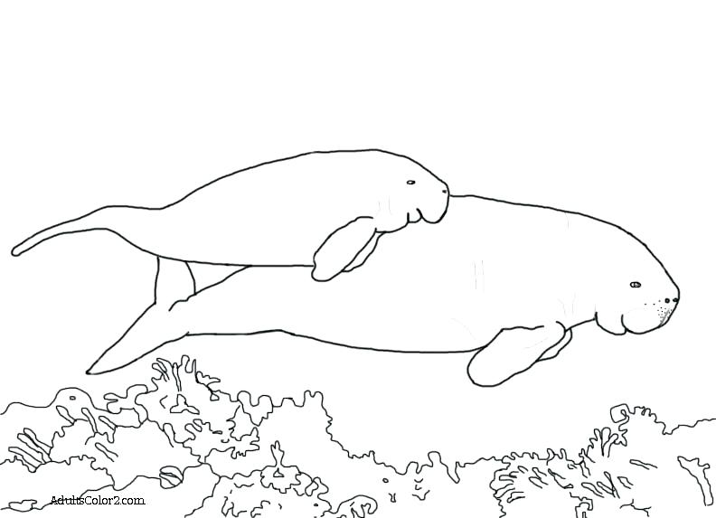 792x573 Manatee Coloring Page Manatee Coloring Book Photo Ideas Page