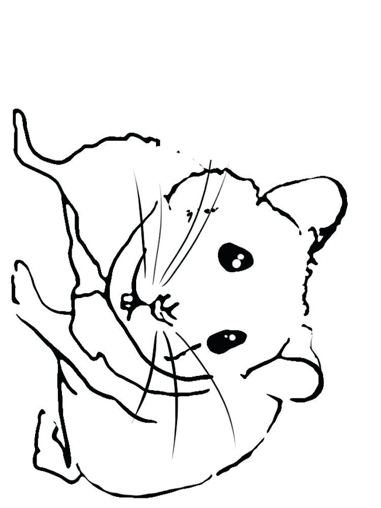 Dwarf Hamster Coloring Pages At Getdrawings Com Free For Personal