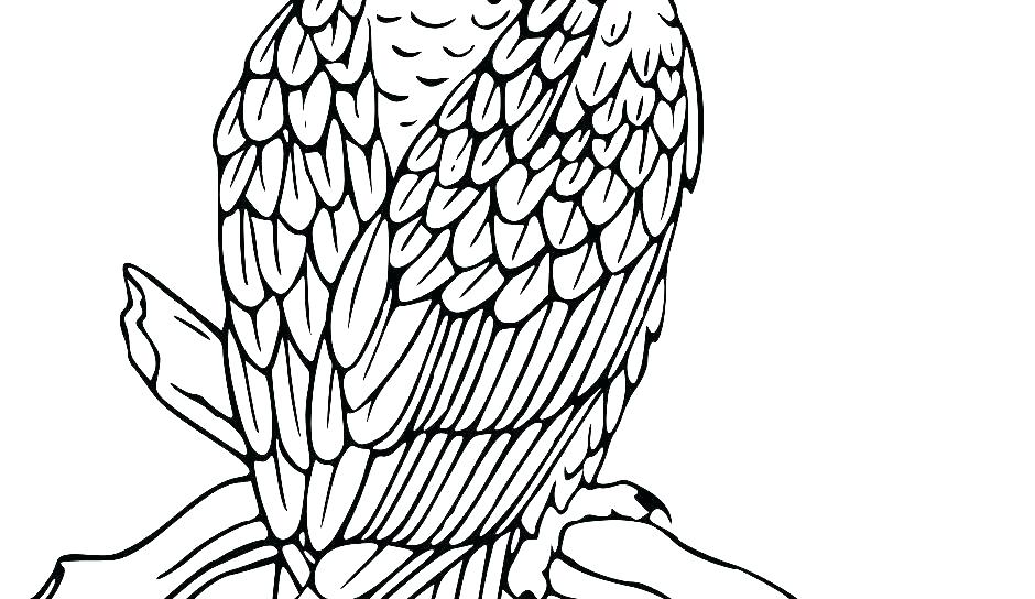 940x544 Coloring Pages Eagle Harpy Eagle Coloring Page Eagle Coloring Page