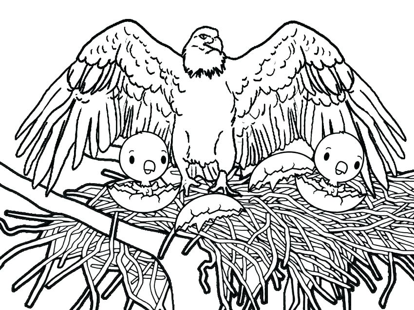 850x638 Coloring Pages Of Eagles Coloring Pages Eagles Printable Bald
