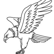 220x220 Eagle Coloring Pages, Drawing For Kids, Videos For Kids, Free