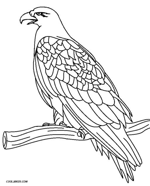 513x635 Exciting Eagle Coloring Pages Printable For Kids
