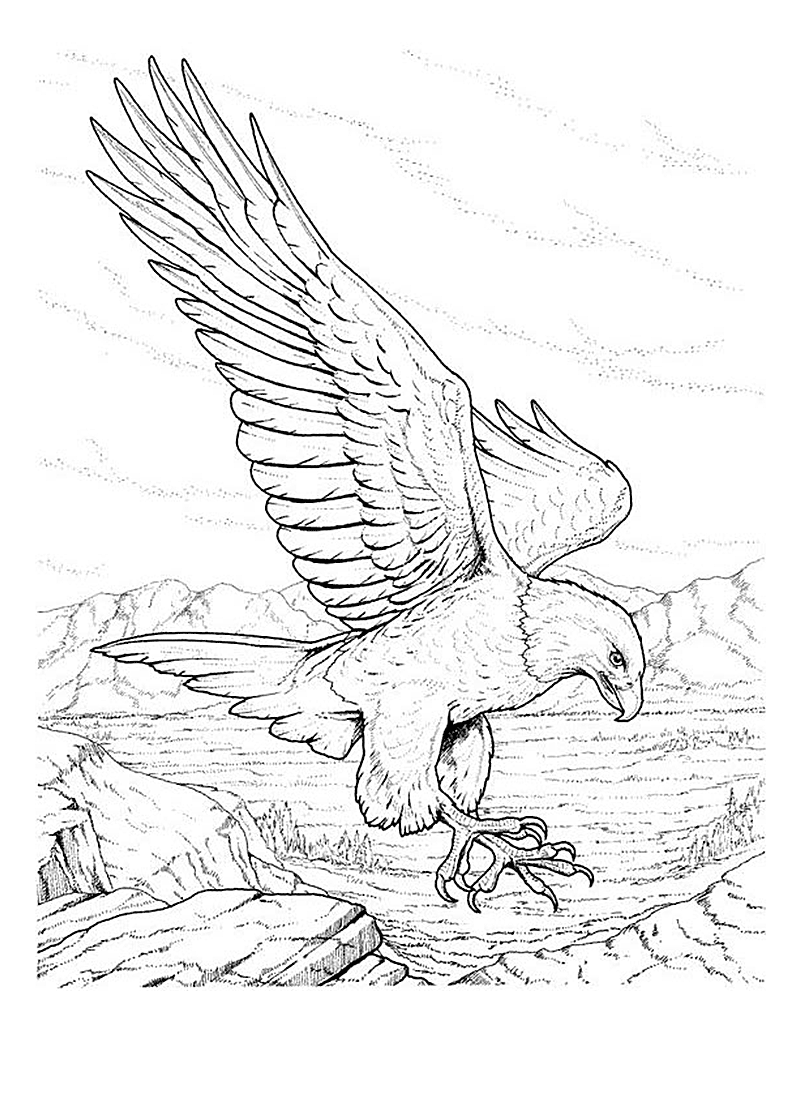 800x1100 Free Printable Bald Eagle Coloring Pages For Kids