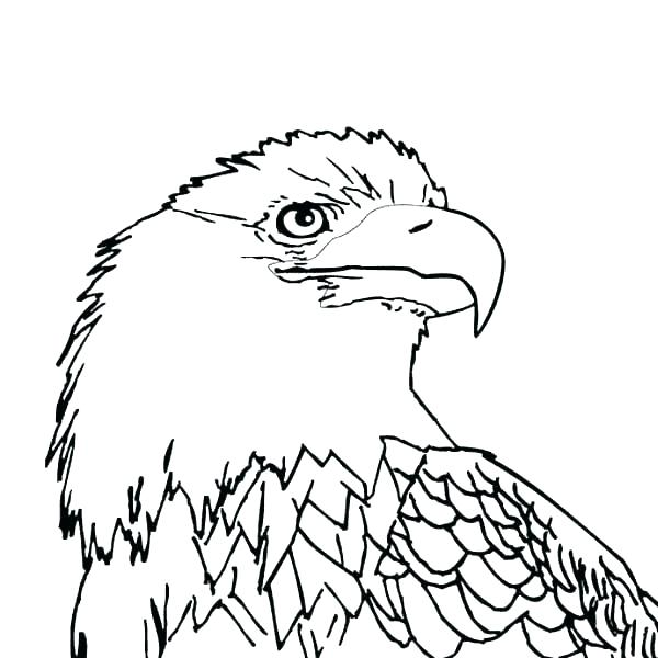 600x600 Philadelphia Eagles Coloring Pages Eagles Coloring Pages Coloring