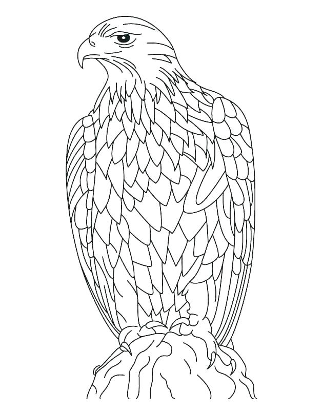 630x810 Eagles Coloring Pages