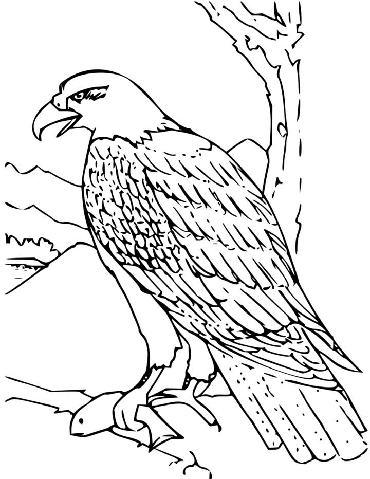 720x932 Bald Eagle Coloring Page For Kids