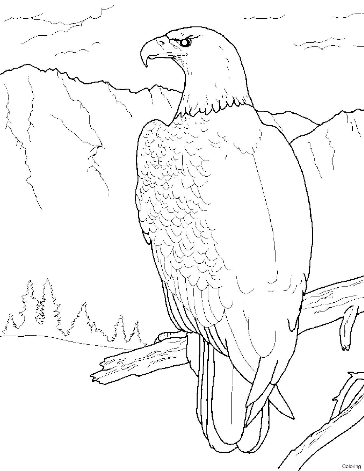1236x1600 Bald Eagle Coloring Pages Mosm