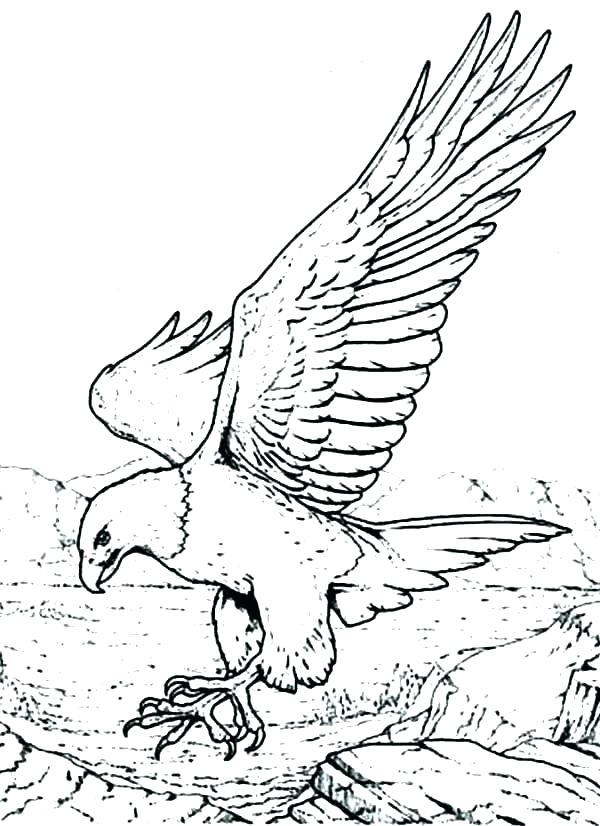 600x826 Eagle Color Page Eagles Coloring Pages Of Free Eagle Color Page