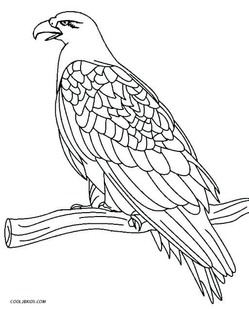 513x635 Eagle Color Page Harpy Eagle Coloring Page Bald Eagle Coloring
