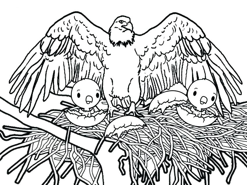 850x638 Eagle Coloring Page Bald Eagle Is Hungry Coloring Page Harpy Eagle