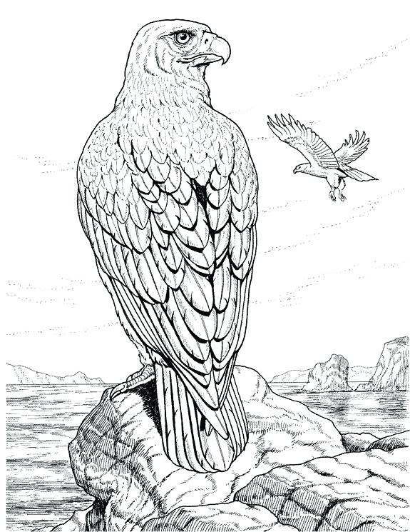575x745 Eagle Coloring Page Detailed Coloring Pages For Adults Coloring