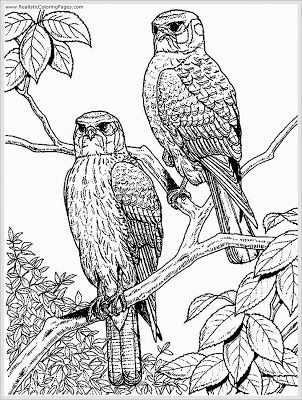 302x400 Eagle Coloring Pages For Adult Coloring Eagle