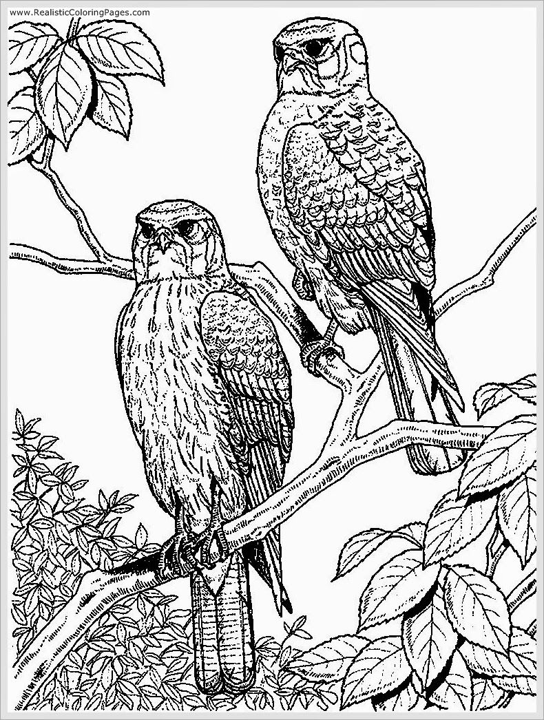 790x1046 Eagle Coloring Pages For Adult Realistic Coloring Pages Adult
