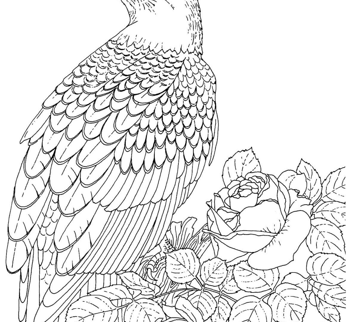 1200x1080 Realistic Bald Eagle Coloring Page Free Printable Animals Harpy